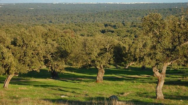 El Bosque Humanizado